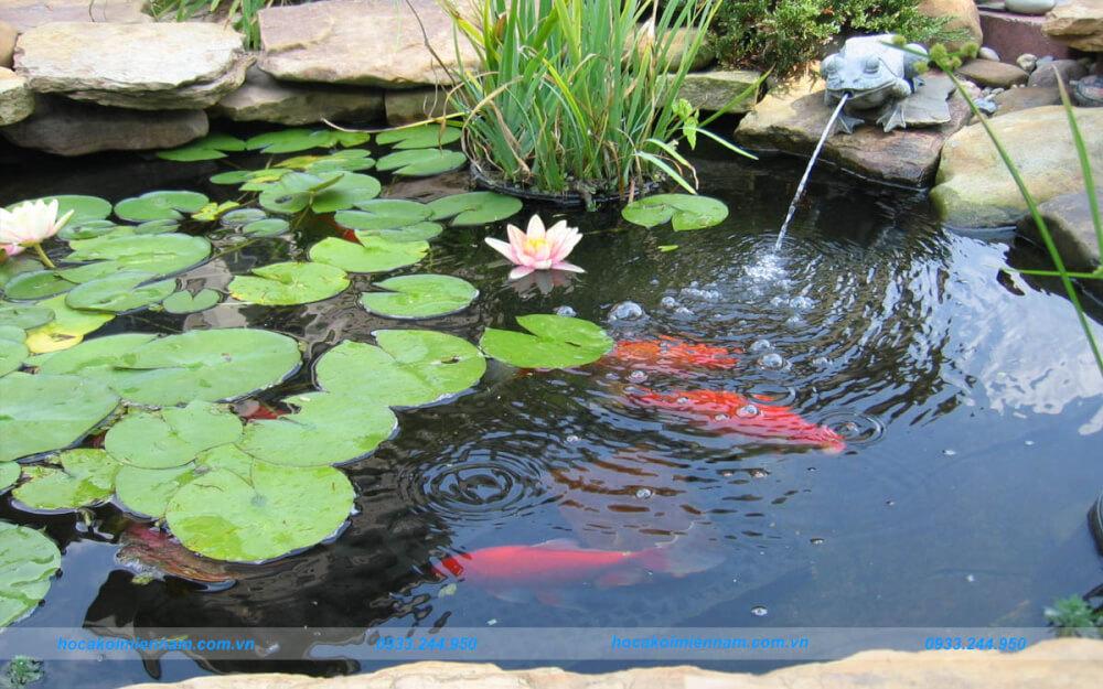 Những điều cần lưu ý khi thiết kế - thi công hồ cá trước nhà. Ảnh 3