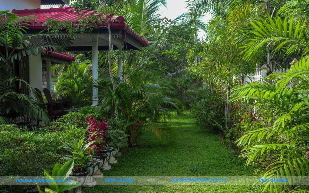 Thi công tiểu cảnh sân vườn tại quận 12