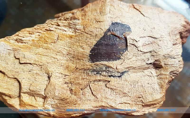 Đá gỗ hóa thạch Campuchia