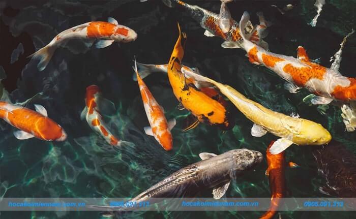 Thi công hồ cá koi tại Đắk Nông. Ảnh 3