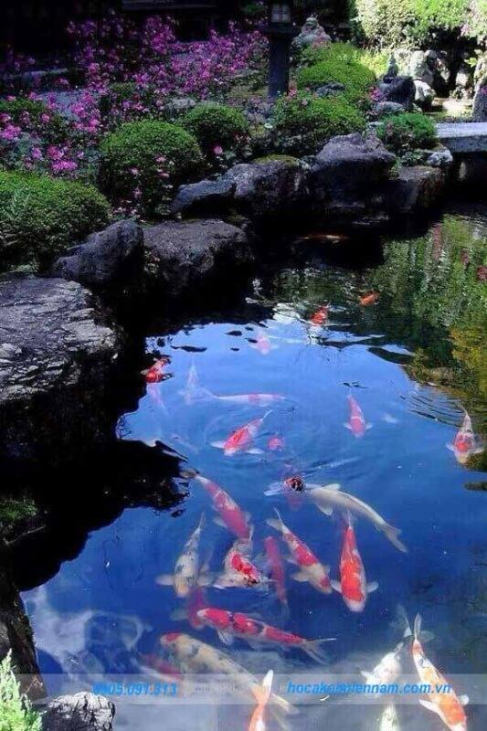 Thi công hồ cá koi tại Đà Lạt