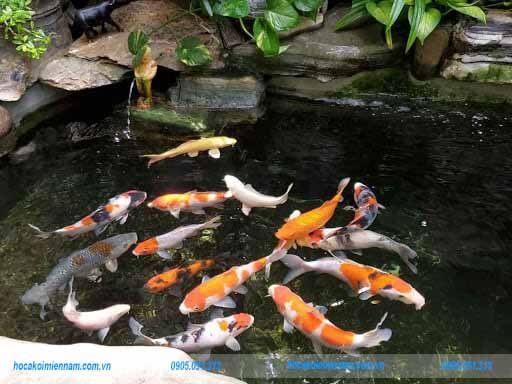 Cải tạo - sửa chữa hồ cá koi đẹp