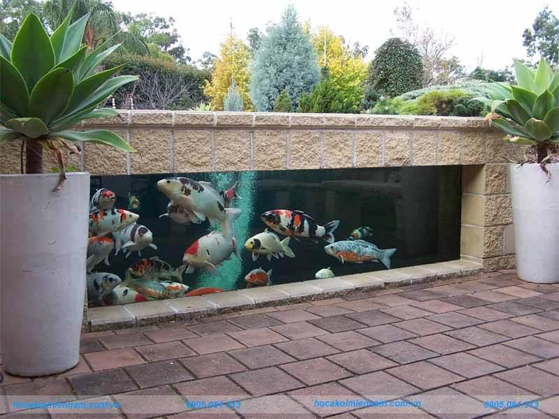 Hồ cá koi kính độc đáo