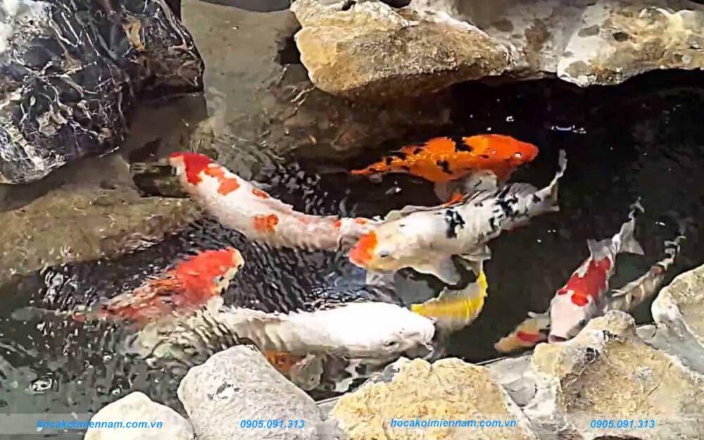 Hồ cá koi mini 1