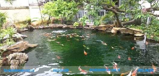 Hồ cá koi sân vườn 1