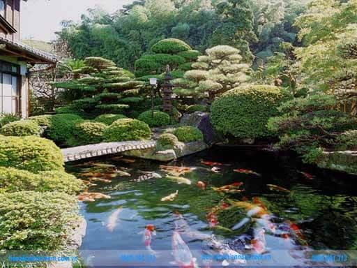 Hồ cá koi theo phong cách nhật bản - 1