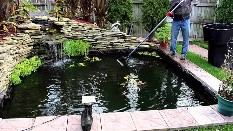 Xử lý nước hồ cá koi để có đàn cá koi khỏe mạnh