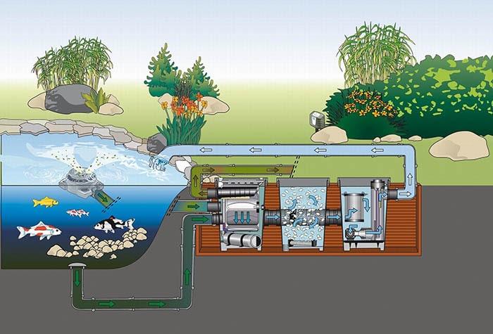 Tìm hiểu hệ thống lọc hồ cá koi