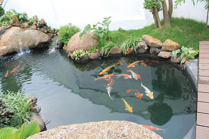 Tổng hợp mẫu thiết kế hồ cá koi ngoài trời đẹp 9