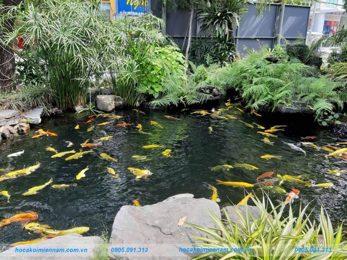 Hồ cá koi sân vườn 03