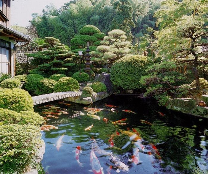 Hồ cá koi sân vườn Nhật Bản